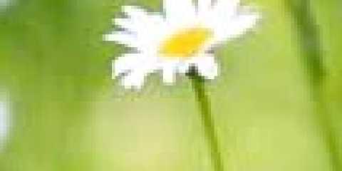 Спринцювання ромашкою: дбайливе лікування запалень